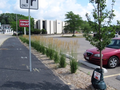 Rollins Rd. got a MAJOR face lift when you're entering the downtown. Trees, perennials, and ornamental grasses were planted over a several hundred foot stretch of right of way.